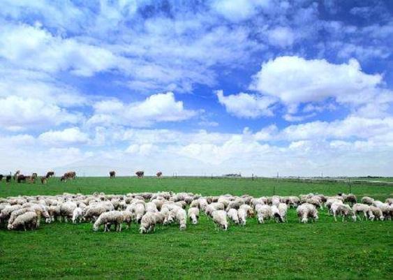 畜牧养殖供热供暖解决方案